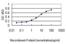 Anti-PPIA Mouse Monoclonal Antibody