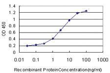 Anti-PPIG Mouse Monoclonal Antibody