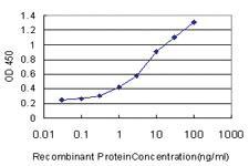 Anti-PPIL2 Mouse Monoclonal Antibody