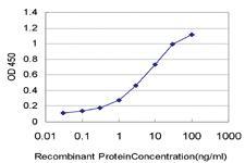 Anti-PPP3R1 Mouse Monoclonal Antibody