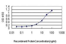 Anti-PSIP1 Mouse Monoclonal Antibody