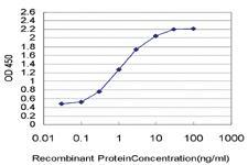 Anti-PWP1 Mouse Monoclonal Antibody