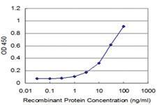 Anti-RAB43 Mouse Monoclonal Antibody