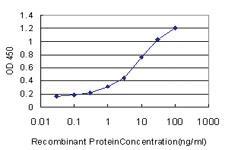 Anti-RAPGEF1 Mouse Monoclonal Antibody