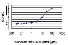 Anti-RAPGEF4 Mouse Monoclonal Antibody