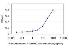 Anti-RAPGEFL1 Mouse Monoclonal Antibody