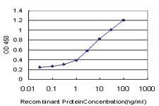 Anti-RASGRP2 Mouse Monoclonal Antibody