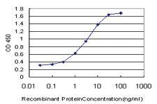 Anti-RASGRP4 Mouse Monoclonal Antibody
