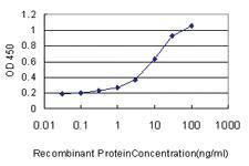 Anti-RHEBL1 Mouse Monoclonal Antibody