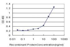 Anti-RHOH Mouse Monoclonal Antibody