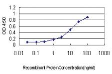 Anti-RHOT1 Mouse Monoclonal Antibody