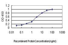 Anti-RIN1 Mouse Monoclonal Antibody