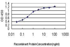 Anti-LONRF3 Mouse Monoclonal Antibody