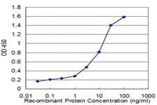 Anti-RPL36A Mouse Monoclonal Antibody