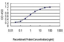 Anti-STON1-GTF2A1L Mouse Monoclonal Antibody