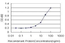 Anti-SAP30 Mouse Monoclonal Antibody