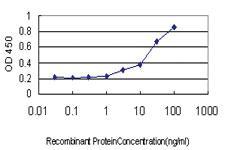 Anti-SERPINA12 Mouse Monoclonal Antibody