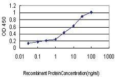 Anti-SERPING1 Mouse Monoclonal Antibody