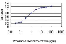 Anti-SH3BP4 Mouse Monoclonal Antibody