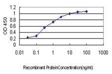 Anti-SH3RF2 Mouse Monoclonal Antibody