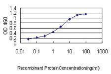 Anti-SLA2 Mouse Monoclonal Antibody