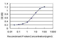 Anti-SLC19A2 Mouse Monoclonal Antibody