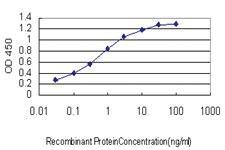 Anti-SLC35A3 Mouse Monoclonal Antibody