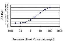 Anti-SLC4A4 Mouse Monoclonal Antibody