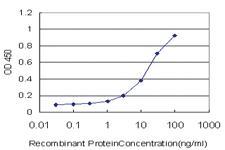 Anti-SMO Mouse Monoclonal Antibody