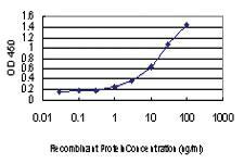 Anti-ATL1 Mouse Monoclonal Antibody