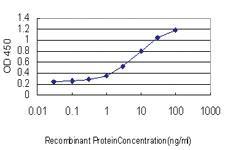 Anti-SSBP1 Mouse Monoclonal Antibody