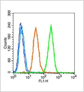 Flow cytometric analysis of A549 cell using NFKB1 (phospho-Ser932) antibody.