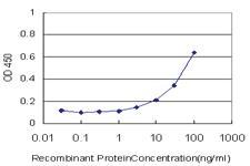 Anti-SUMF2 Mouse Monoclonal Antibody