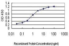 Anti-TAF1L Mouse Monoclonal Antibody