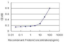 Anti-TAZ Mouse Monoclonal Antibody