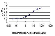 Anti-TCEB3 Mouse Monoclonal Antibody