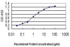 Anti-TCFL5 Mouse Monoclonal Antibody