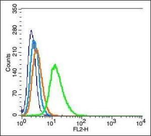 Flow cytometric analysis of Rsc96 cell using Tubulin alpha 6 antibody.