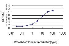 Anti-ACOT11 Mouse Monoclonal Antibody