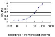 Anti-PMEPA1 Mouse Monoclonal Antibody