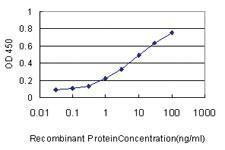 Anti-TNS4 Mouse Monoclonal Antibody