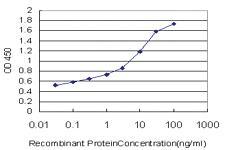 Anti-TNXB Mouse Monoclonal Antibody