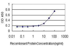 Anti-TRIP13 Mouse Monoclonal Antibody