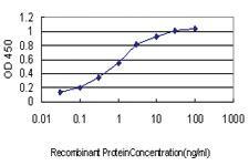 Anti-TRPV1 Mouse Monoclonal Antibody