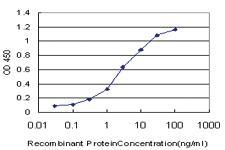 Anti-TSPAN32 Mouse Monoclonal Antibody