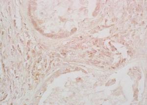Anti-EGF Rabbit polyclonal antibody